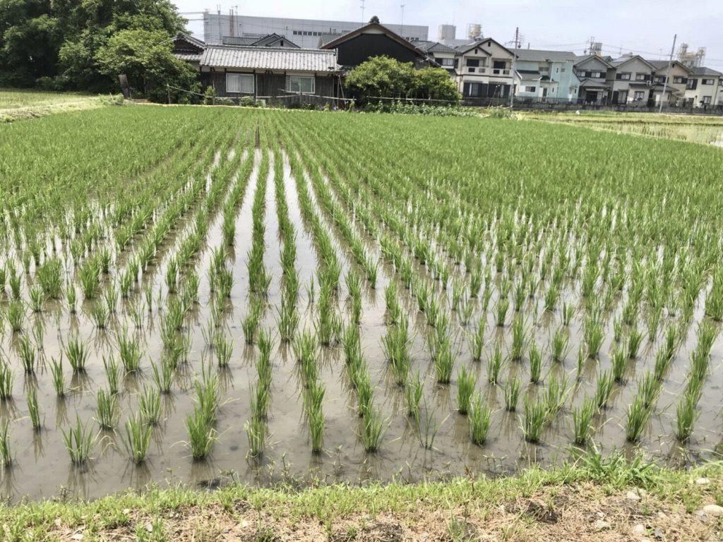 榮農場さんでの田植え体験レポート!